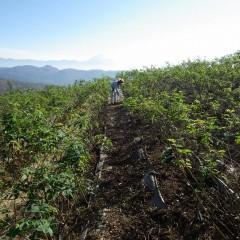 ローズ畑の除草した草や落ち葉の片付け作業