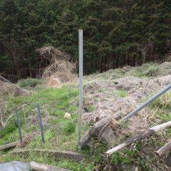 獣害防止柵の無い場所に杭を打ち込みます