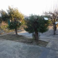 伸びすぎた枝も切って日陰を作らないようにコンパクトにしました