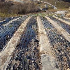 早く根が活着するように灌水してこの畑の作業は完了しました