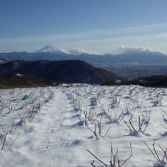 雪に覆われたローズ畑は静寂に包まれています
