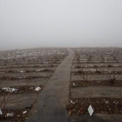 日当たりの良いローズ畑はほぼ雪が解けていました