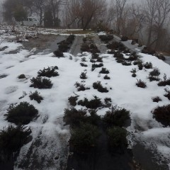 タイム・マストキナ畑もまだ雪が残っています