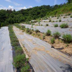 農場のラベンダー畑