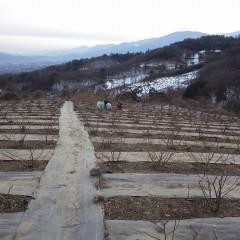 山々の北斜面には雪がまだ残っていて凍るように冷たい風が農場へ吹いて来ます