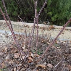 古い枝と新しい枝の更新をします