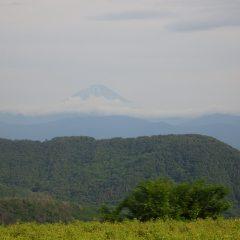 夕方、富士山が顔を出してくれました