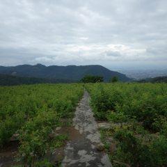 厚い雲に覆われた農場のローズ畑