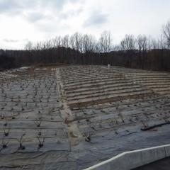 農場のローズ畑では剪定も終わり清掃作業中