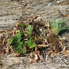 除草して来たるべき春に備えます