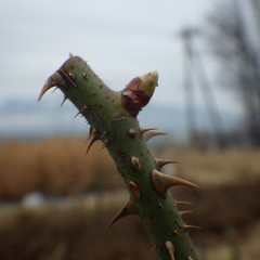 芽が伸びて葉の先端が顔を出しています