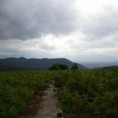 朝は晴れて28℃越えでしたが昼前からどんよりとした雲が空を覆い始めました