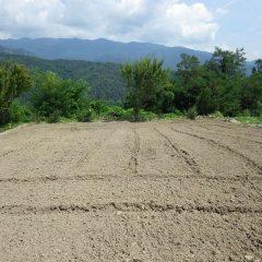 農場ではトラクターによるロータリー作業