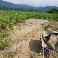 トラクターが通りやすいように防草シートを張りました