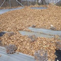 冬の間に木枯らしで落ち葉の吹き溜まりが出来ていました