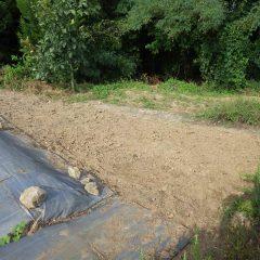 除草が終わって綺麗になった畑