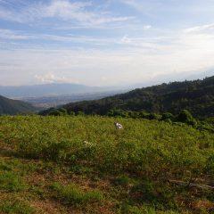 ローズ畑の下枝切りと除草作業は日が傾くまで続けられました