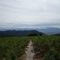 台風が近づくなか穏やかな農場の風景