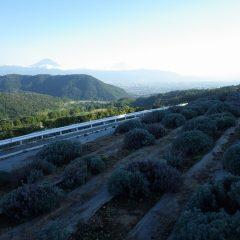 夕方、富士山が姿を現してくれました