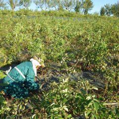 暑さとヤブ蚊に襲われながら雑草と戦っています