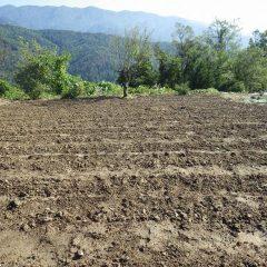 種蒔き準備が出来ているカモマイル・ジャーマン畑
