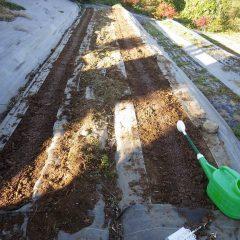カモマイル・ジャーマンの種を蒔いて灌水して完了