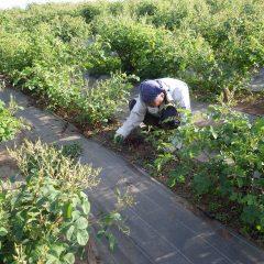 綺麗な農場を見てもらう為に今日も除草作業に励んでいます