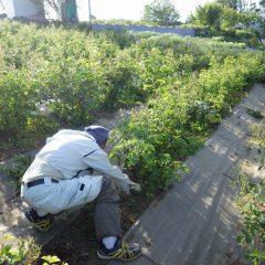 日が暮れるまで除草作業は続きました