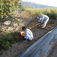 雑草を取り除いた所から鍬で耕します