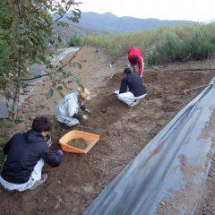 土を掘り起こして出て来た石を拾い出します