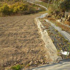 斜面にある畑は雨で表土が流されてしまいます
