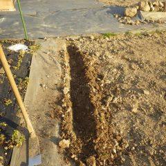 雨水を流す排水溝を掘りました