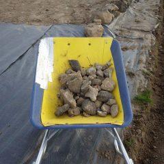 溝掘りで出て来た石の拾い出し