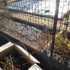 フェンスの内側に伸びた枝を引き出します