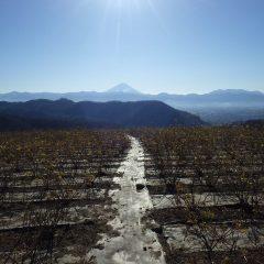 2018年幕開けは雲一つ無い快晴の冬空に富士山が聳えていました