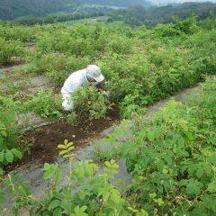 梅雨の蒸し暑い中で除草作業は続きます