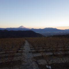 農場始めも日没まで作業は続けられました