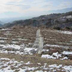 日当たり良い畑から徐々に雪が溶け始めています