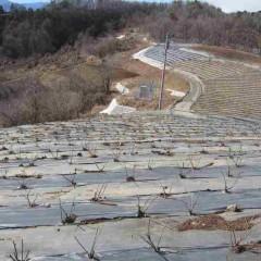 剪定も順調に進みスッキリとしたローズ畑