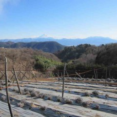 風の強い日は雲も飛ばされて富士山が綺麗に見えます