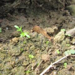 秋になりようやく雨が降ってこぼれ種が発芽し始めました