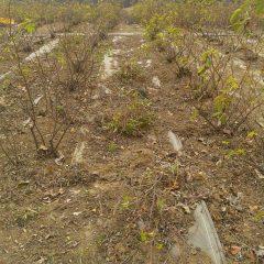 除草した草と切った枝の後片付け作業