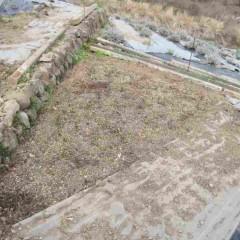 苗を取ったベルガモットミントの親株畑に新しい土を客土します