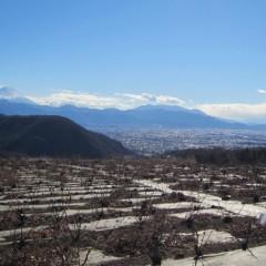 剪定が終わった畑は遠くに見える富士山の様に清々しいばかり