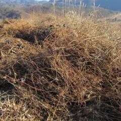 剪定した枝の山