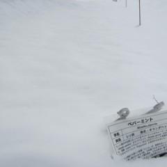 12日、8日に降った雪で覆われたままです