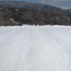 農場のカモマイル・ジャーマンも雪の中