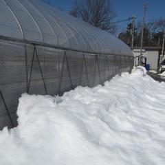 ハウスの屋根の雪を落とした側面は雪の山