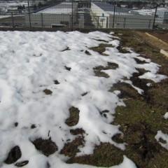 1m以上積もった雪も徐々に溶け始めています