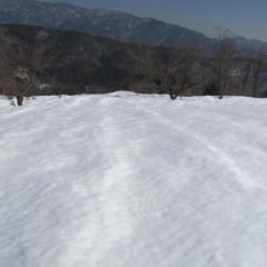 農場のカモマイル・ジャーマン畑は雪で覆われています